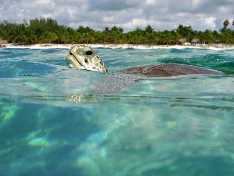 Yucatan Beaches